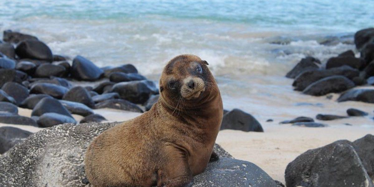 Observa los lindos bebe lobos marinos de Galapagos.
