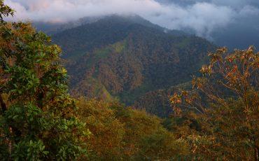 El bosque nublado es un hotspot de la biodiversidad.