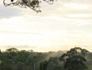 El bosque nublado es un ecosystema de alta biodiversidad