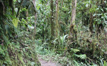 Bosque-nublado-Ecuador