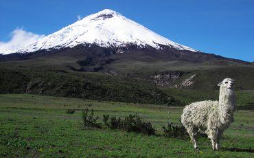 Disfruta de paisages hermosos durante su tour de escala del Cotopaxi.