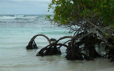 En Santa Cruz usted puede ver manglares.
