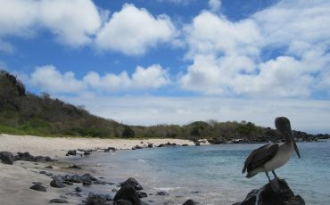 En San Cristobal puede observar diferentes aves marinos.