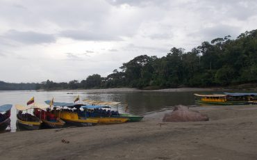 En Puerto Misahuali, una de las entradas a la selva, puede observear monos a poca distancia.