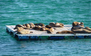 Parece que tambien los lobos marinos están de vacaciones en Galapagos.
