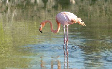Observa flamingos rosados durante su Island Hopping tour.