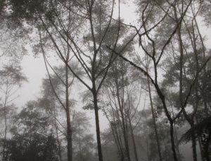 el bosque nublado de Santa Lucia es hermosy y misterioso