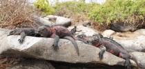 Island Hopping Galapagos - Santa Cruz and San Cristobal 5 Days