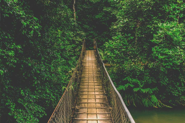 amazonia-bridge-ecuador-travel