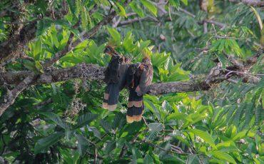 Ecuador es un hotspot para la observacion de aves.