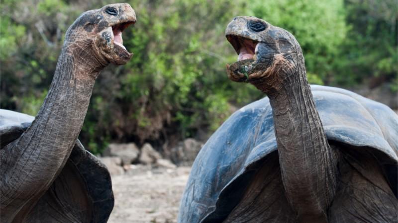 En Galapagos se puede observar animales en su habitat natural