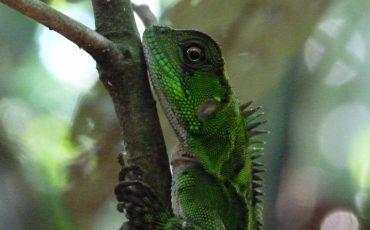 Hay muchas especies de anfibios en el Yasuni.