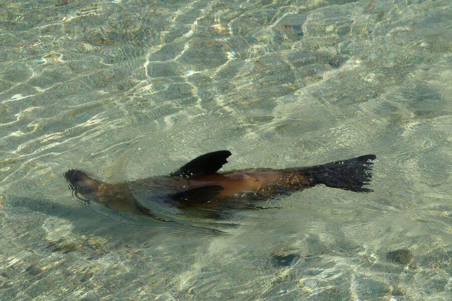 En las Islas Galapgos se puede experienciar vida silvestre desde muy cerca.