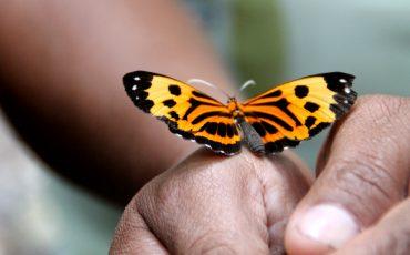 Los niños se van a alegrar de mariposas coloridas.