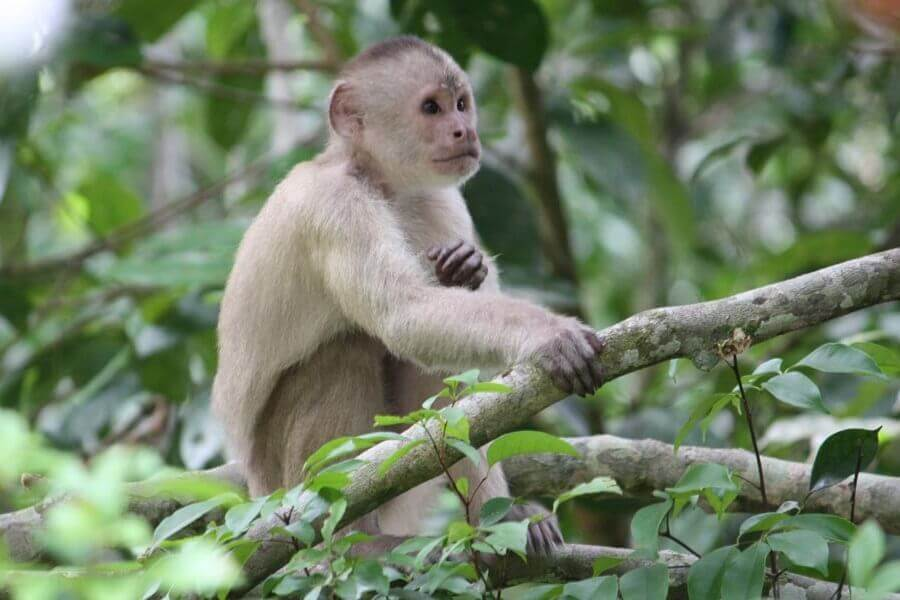 La Amazonía de Ecuador es una de los cuatro regiones de Ecuador que son espectaculares para visitar.