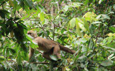 En el parque nacional puede observar varios especies de monos.