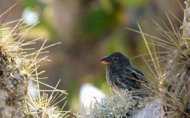 En el Ecuador se puede observar una diversidad enorme de aves.
