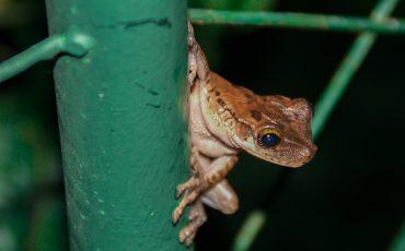 Descubra la variedad de anfibios en la reserva cuyabeno.