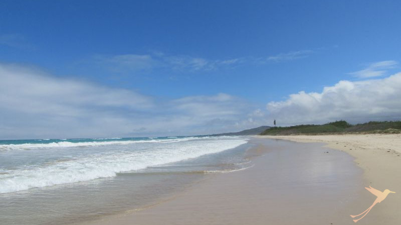 The Beaches on Isabela, Galapagos are beautiful