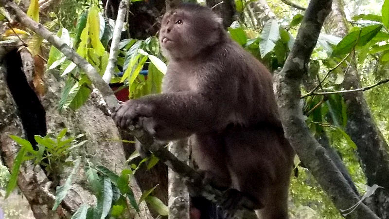 Get up close to monkeys in Puerto Misahuali.