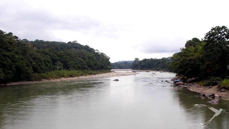 The Napo River has a wide river beach at Puerto Mishuali.