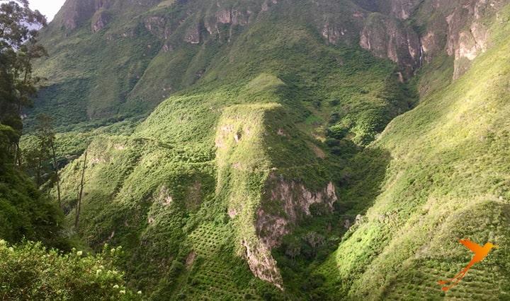 Andean Bears Ecuador viewpoint