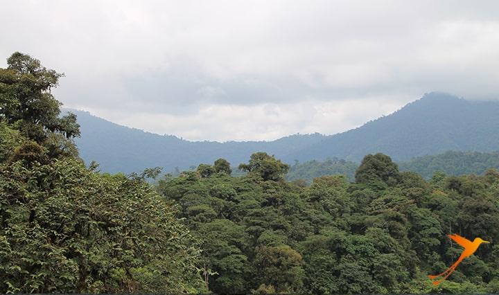 View Mashpi Lodge Ecuador