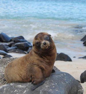 Baby-sea-lion-Española-Island_1