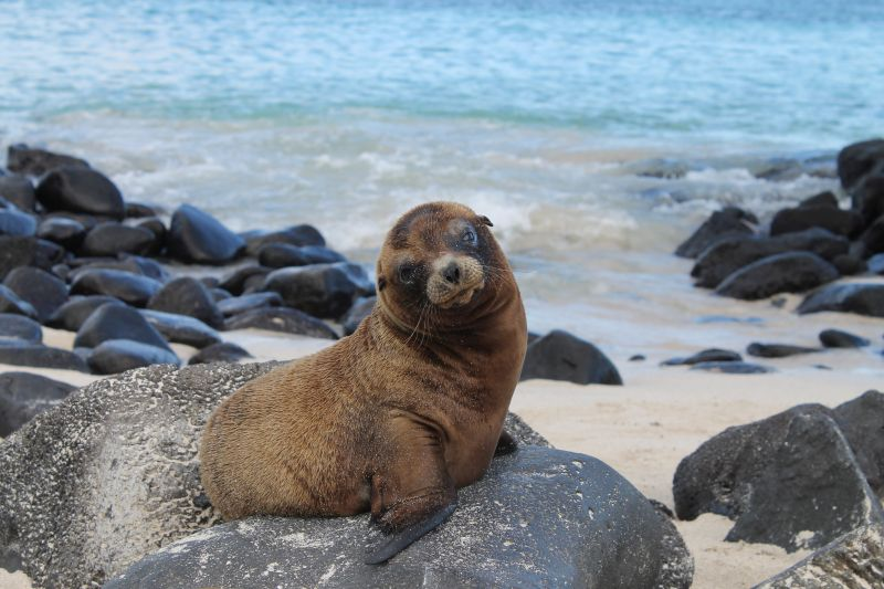 Kids will have a lot of fun discovering the amazing wildlife of the Galapagos.