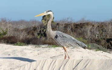Discover the wildlife of Galapagos during your trip to the Galapagos