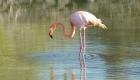 Flamingos in Santa Cruz