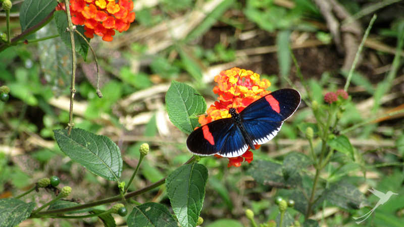 You can observe many butterflies in Mindo