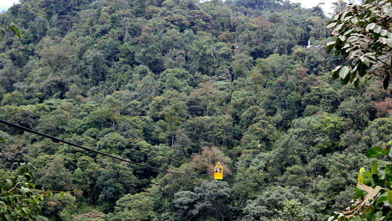 You can fly over the cloudforest with the cable car
