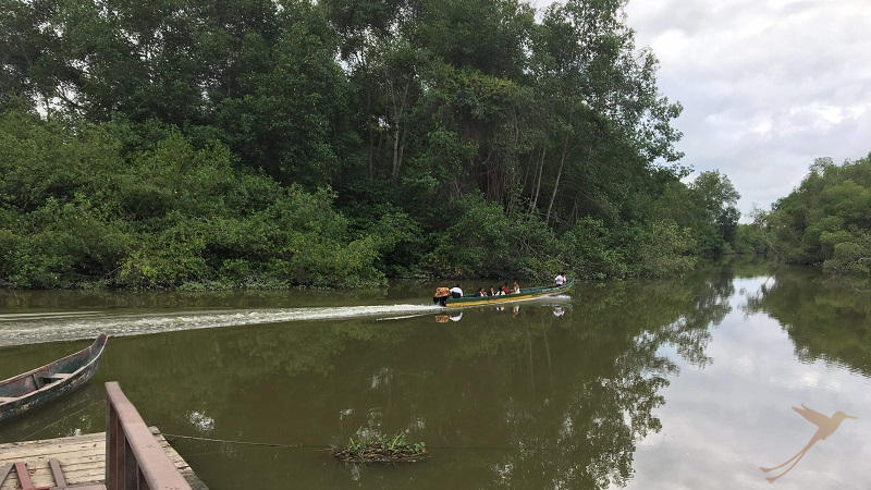 On a canoe excursions you can explore the mangroves from inside.