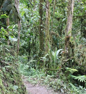 Discover the amazing cloudforest on hikes from the village of Mindo.