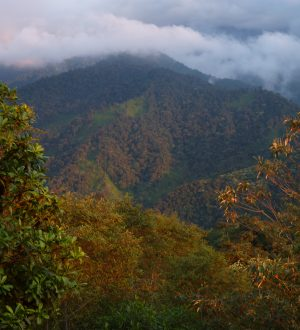 The cloud forest is an amazing vegetation zone between the andean and coastal region.