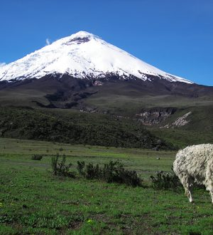 Enjoy the Andean landscape on hikes in the Cotopaxi reserve.