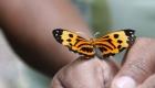 Butterflies in Cuyabeno
