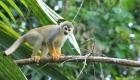 Wildlife in Cuyabeno