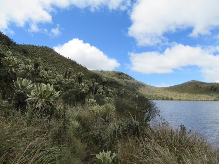 The El Angel Nature Reserve is a beautiful piece of landscape in the north of Ecuador.