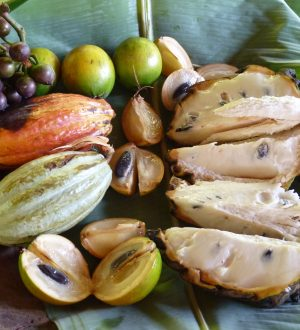 The jungle offers delicious fruits