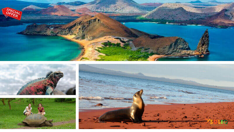 Explore the Galapagos Islands with during a cruise.