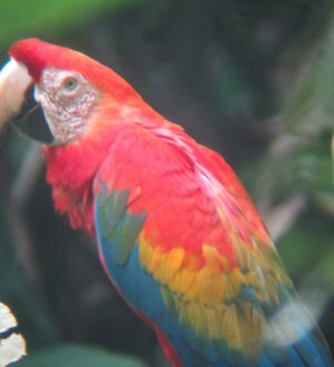 VWatch colorful parrots in the Yasuni Nationalpark