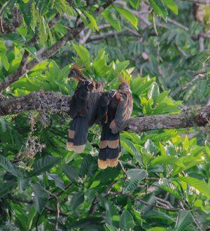 Find rare bird species during your birdwatchers tour in Ecuador