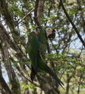 Discover parrots in the Ecuadorian rainforest