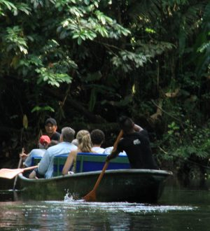 On a canoe ride on Napo River you can enjoy beatiful wildlife views.
