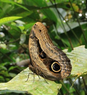 Discover numerous insects in the Yasuni national park.