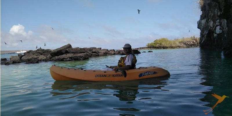Observe the amazing wildlife of the Galapagos during this kayak tour