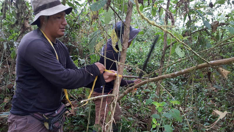 Trees are monitored by the staff of Jocotoco.