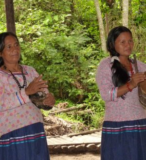 During your stay in the Yasuni national park you will also visit a indigenous community.